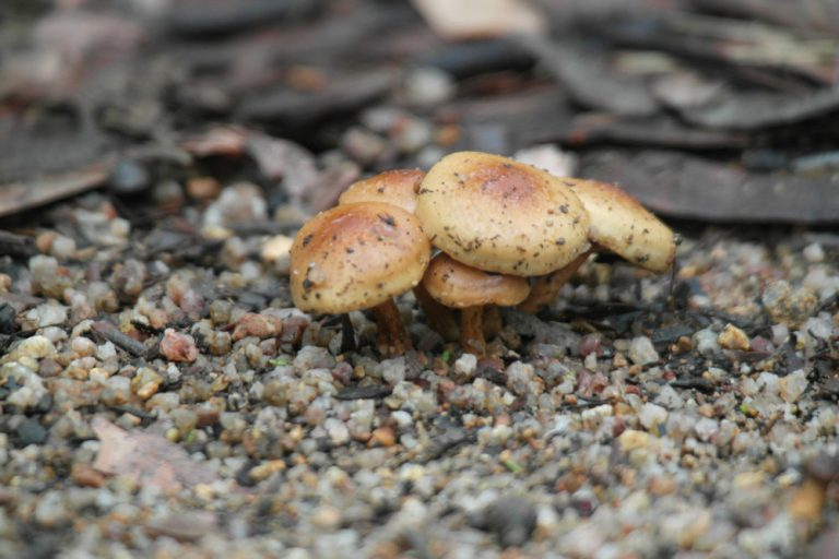 Photograph of Mushroom on a Forest